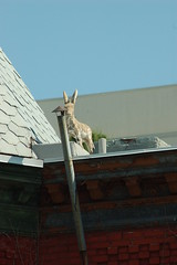 Rooftop Donkey, 13th & U Sts. NW