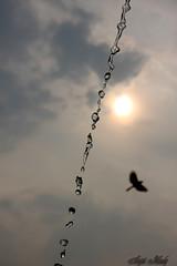 Water the Life (AvijitNandy) Tags: