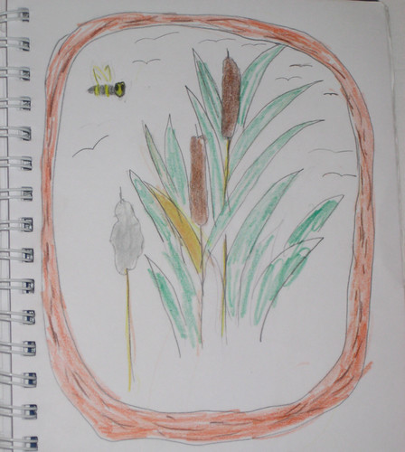 Cattail Nature Journal (By Zippy Age 9)