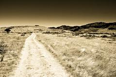 the path (nosha) Tags: california park summer sky nature beautiful beauty grass landscape pattern apocalypse august cal organic f11 2009 ano nuevo anonuevo thepath lightroom 18mm blackmagic nosha 0ev 18200mmf3556 1640sec nikond300 summer2009 apocalypsefirday californiaoregon2009 1640secatf11