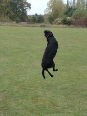 Ruby's jump