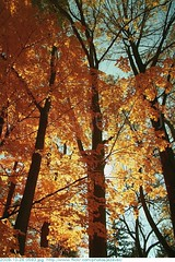 2009-10-26 0593 Fall in Indiana - Holliday Park, Indianapolis Indiana (Badger 23 / jezevec) Tags: park autumn trees orange tree green fall nature leaves yellow forest season arbol leaf log woods timber indianapolis herbst indiana boom foliage environment otoo  arvore holliday albero autunno arbre 2009 strom baum outono puno treet  pokok  aa koks   copac   drzewo  jezevec mti medis arbore crann drevo cy     auomne   deherfst badger23 20091026 sira