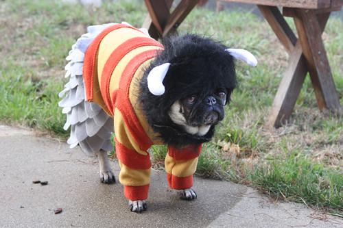 Wild Pug