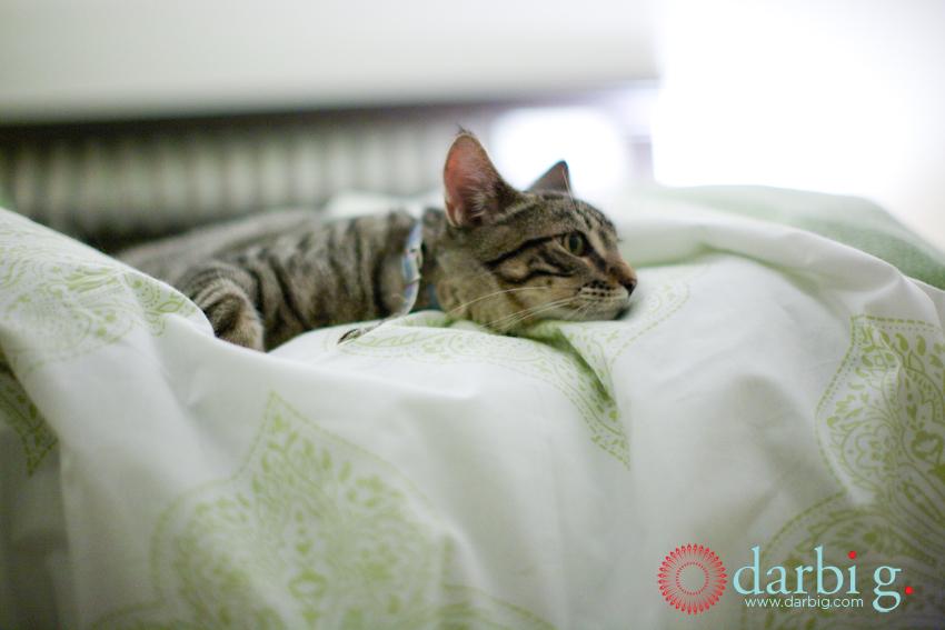 cat-hween-104