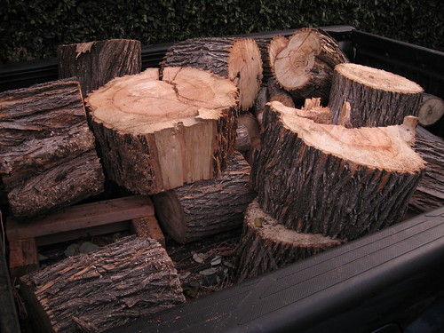 Modesto ash logs filling my truck bed
