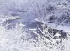 "torrente con neve ("" paolo ammannati "") Tags: italy panorama snow ice me alberi forest italia photographer top natura io tuscany neve toscana inverno colori viaggi rami bosco casentino ghiaccio foresta paoloammannati flickraward effettinaturali mygearandme fotoconneve panoramaconneve"