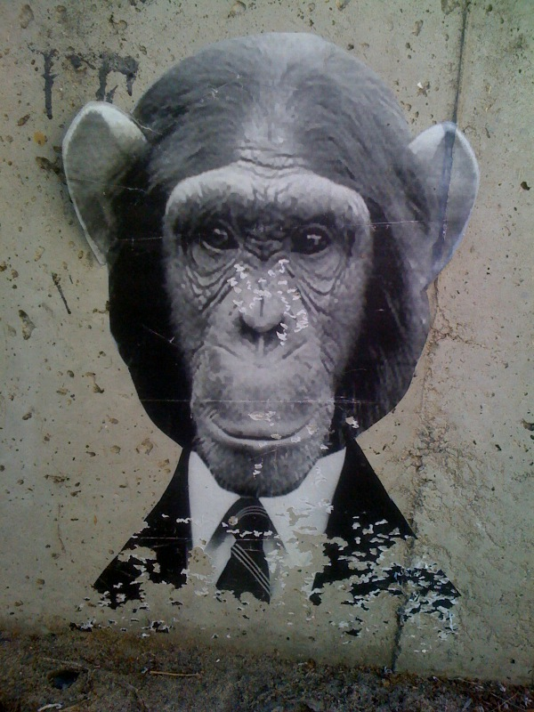 chimp in suit