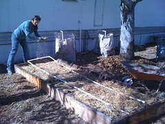 Potato Planting #2