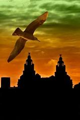 "Liver Building (Tony Shertila) Tags: england sky silhouette architecture river boats europe gull liverbuilding rivermersey meseyside buildingcity platinumheartaward creattività virgiliocompany ""northengland"" wateririshsea"