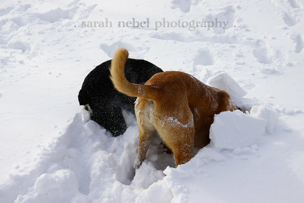 . they love the snow .
