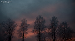 Winter (Cecilie Uglehus) Tags: pink trees winter sky nature norway photoshop canon outdoors colorful mood purple majestic mystic lightroom larvik 450d cecilieeideuglehus