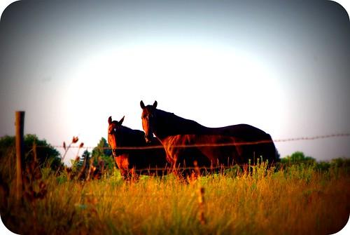 Summer 2009 Horses