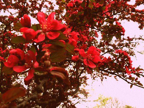 bloomsfromyard1-0511