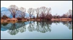 Light Blue (ELtano86) Tags: sebino iseo reflection reflexions reflexion reflejo riflessi riflesso river rio specchio mirror blue double trees tree alberi albero eltano86 bresciatoday brescia torbiere torbiera