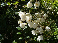 DSCN0616 (wimomz/kari) Tags: bymaya july09 wimomz