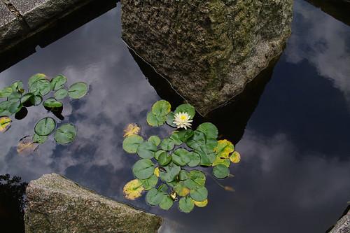空という海に咲く花