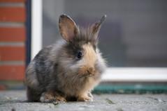 [フリー画像] [動物写真] [哺乳類] [小動物] [兎/ウサギ]       [フリー素材]