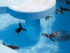 penguins in the pool