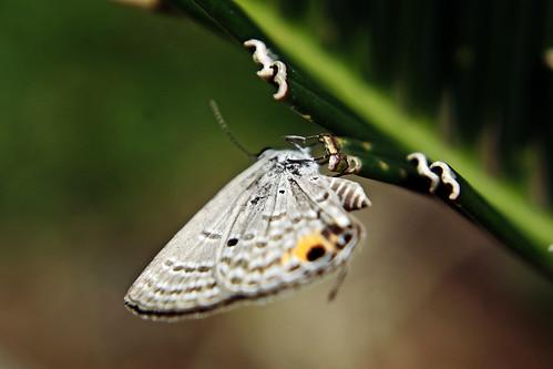 Moth, macro.