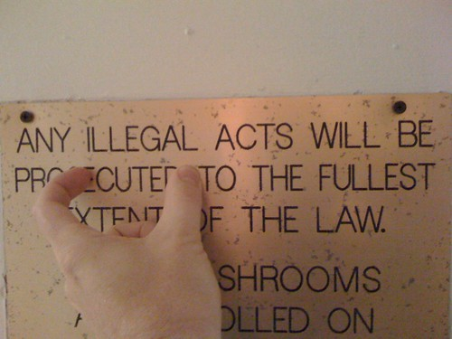 Any Illegal Acts Will Be Cute