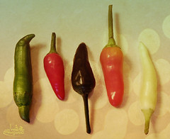 Colorful Friends (Mohammad Reza Rostami) Tags: friends hot pepper colorful chili redhotchilipeppers   mohammadrezarostami
