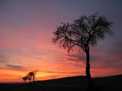 sunset (**MIKA**) Tags: thringen sonnenuntergang herbst allee landkreis mosen elster greiz pflaumenbaum wnschendorf landstrase endschtz