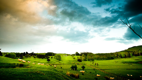 Auckland New Zealand Landscape by Merit Attention