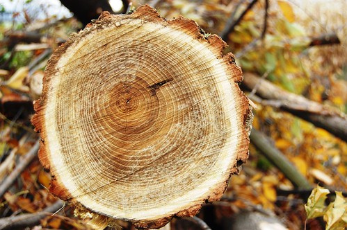 growth_rings