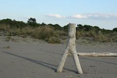 Sun addicted (Cheshire Cat's Friend) Tags: wood sun beach smile female bikini addicted tronco spiaggia grosseto disegno maremma femminile principinaamare flickaward maremmatoscanaelaziale blinkagain