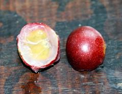 Myrciaria dubia (Camu camu fruit)