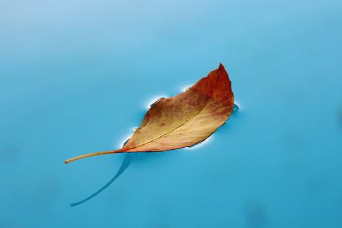 Leaf Floating by Hector Ramirez. (devildog1.0 on Flickr)