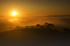 Friday Morning (Lee Sie) Tags: trees sky orange fog clouds sunrise amber view sandiego horizon hill lajolla sillhouette mtsoledad