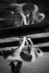 O Cncavo e Convexo (kass) Tags: city brazil urban dog co brasil fantastic photographer saopaulo sopaulo capital perro metropolis urbano reflexo brasileiro urbanscenes paulista sentiments diamant posie ensaiofotogrfico urbanscenery cenaurbana paulistano paulicia jornadafotogrfica fineartphotos sadafotogrfica motions anawesomeshot excellentphotographerawards flickrbr goldstaraward espirits cityofsaopaulo kass