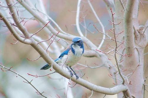 bird3 campolo