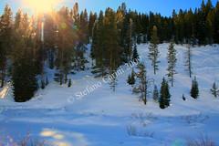 Blue sky (Carini Stefano) Tags: blue trees winter sky sun snow forest canon rebel january idaho national southeast caribou 2009 xti colorphotoaward