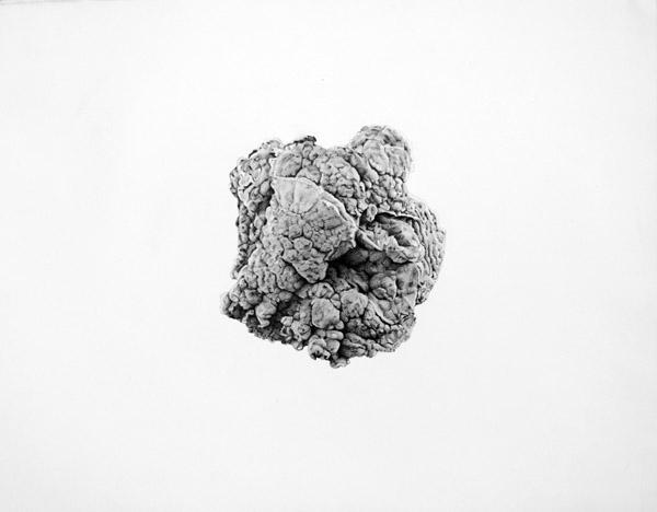 Marissa Textor on Ape on the Moon