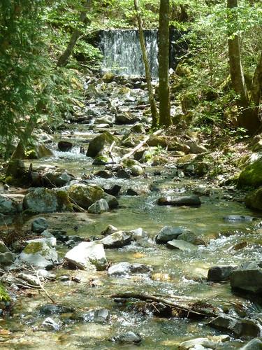 エコピアの森 小川