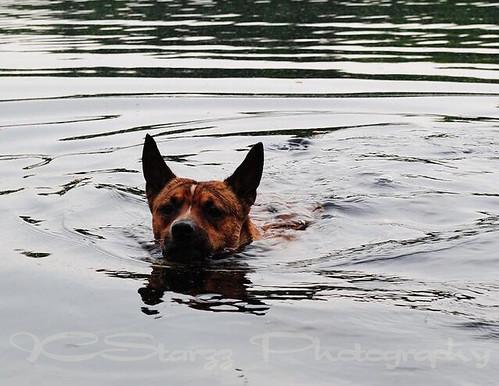 good swimmer1