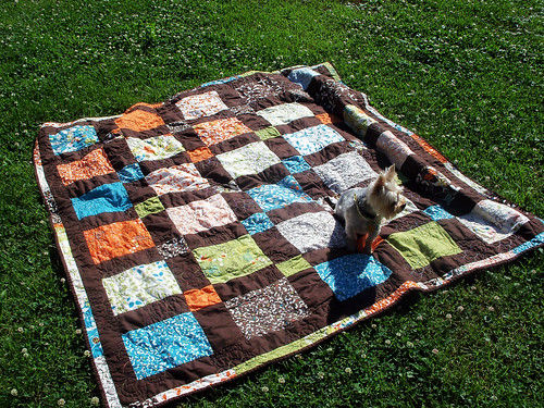 Quilt! And the dog.