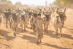 Small Shepherd (Harshal Orawala) Tags: 121clicks small shepherd boy lights india natgeo bhuj kutch