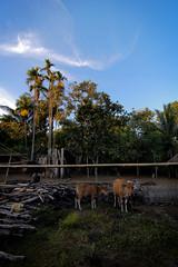 Blue sky at Senaru Base Camp (hasmanizam) Tags: bali nude indonesia lombok bogel rinjani luarbiasa
