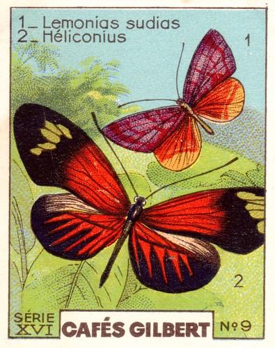 gilbertpapillons012