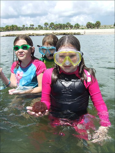 Kassedy finds a lovely sea urchin!