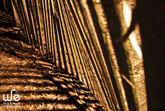 Bkanvsky & Maladie / USA & Mexique Tour 2009 (we make it chromatic) Tags: usa tour mexique romain 2009 chromatic secco maladie bokanovsky bkanvsky stereokini stereokinitumblrcom