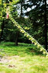 Heiliger Berg, Kronberg 2009 (Spiegelneuronen) Tags: natur pflanzen berge steine vegetation bume taunus gestein kronberg kelten altknig erdgeschichte witterung hochtaunus quarzit rheinischesschiefergebirge keltischer taunusquarzit ringwwlle weisesteine jahrtausende