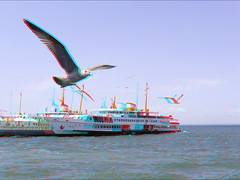 Seagulls_Anaglyph 3D stereo picture; you need red/Cyan glasses (Shahrokh Dabiri) Tags: boat fly seagull gull anaglyph stereo istanbulturkey redcyan sterography floatingintheair 3dpicture bigiland ttweffect sdmrig boyoukada