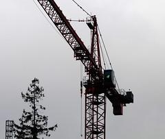 Anglų lietuvių žodynas. Žodis crane reiškia 1. n 1) gervė; 2) tech. keliamasis kranas; 2. v 1) ištiesti (kaklą) (out,over, down); 2) kelti kranu lietuviškai.