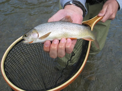 Jackson Hole Wyoming Cutthroat Trout