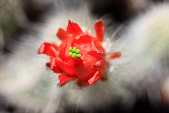 100209_desertflowers02