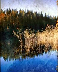 Loch Ard Reeds - Trossachs National Park - Scotland. (Devilineden) Tags: park texture water clouds photoshop canon reflections d50 reeds eos scotland sigma national loch dslr 1020mm trossachs ard kinlochard